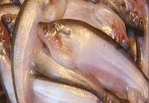 যুক্তরাষ্ট্রের বাজারে আঁশবিহীন বাংলাদেশী মাছ নিষিদ্ধ